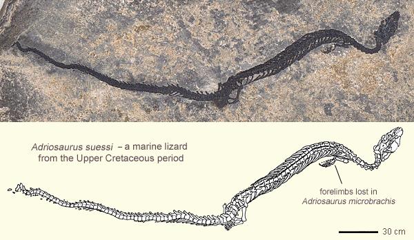 Visual Evolution: Snakes with Legs - Snake Evolution