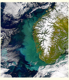 Phytoplankton bloom off the coast of Norway