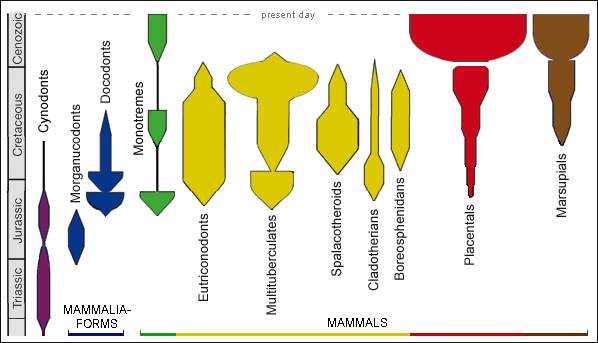 Diversity patterns of major groups of Mesozoic and Cenozoic mammaliaforms and mammals