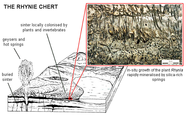 adapted from material on the Rhynie Chert website of the University of Aberdeen