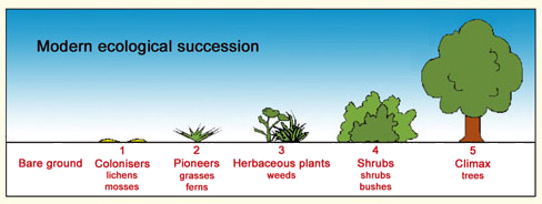Modern ecological succession